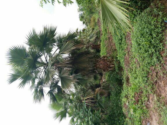 重庆超艺苗木种植场