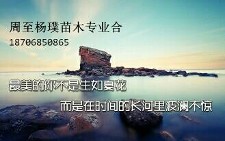 周至杨璞苗木专业合作社