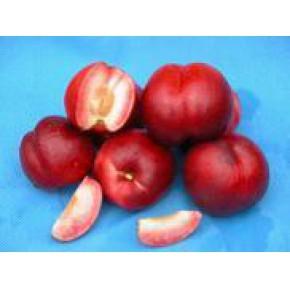 山东早熟甜油桃,鲁星1号油桃树苗,夏雪桃树苗,早露蟠桃