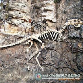 博物馆科技园恐龙化石气龙LT-BB-QLBHS-H01