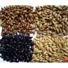 小麦芽 中国 小麦