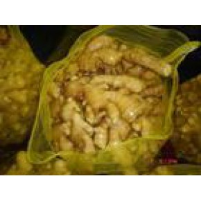 大量出口级各种优质保鲜大姜欢迎前来选购