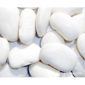 现货供应大量绿色食用产品白豆   发货时间短
