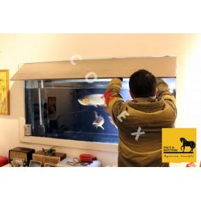 上海鱼缸清洗 水族箱清洗 清洗鱼缸 清洗水族箱 让您观赏更简单