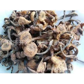野生榛磨 野蘑菇 小鸡炖蘑菇 野生蘑菇纯野生绿色食品