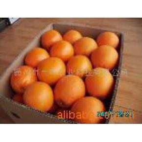 原产地优质香甜80MM以上赣南脐橙