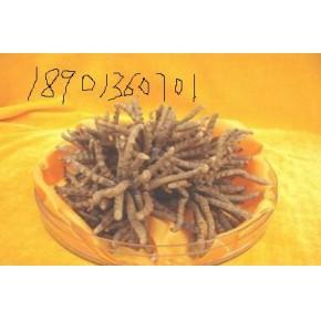 北京回收冬虫夏草(18901360701)绝对高价