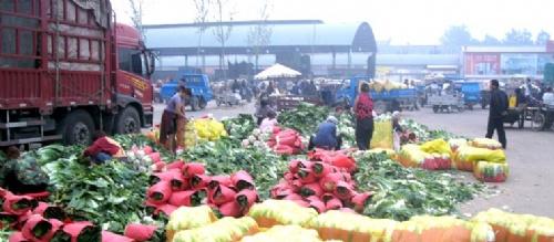 河北省定州市蔬菜基地批发市场玉斌代购中心