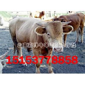 国家重点支持畜牧繁育基地