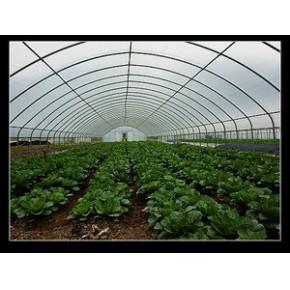 昆明温室菜棚-精品专业温室公司