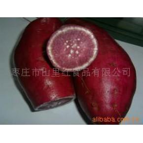 紫红薯 济薯18
