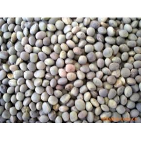 箭舌豆(野豌豆) 豌豆 99.8(%)