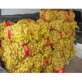 质量好、信誉好的大姜厂家--青州金泽食品