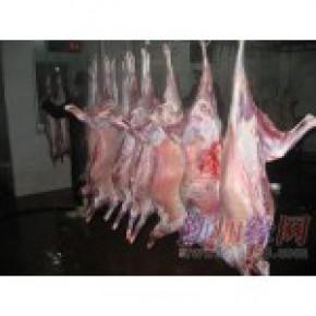 云南羊排 羔羊排 羊脊骨岀售