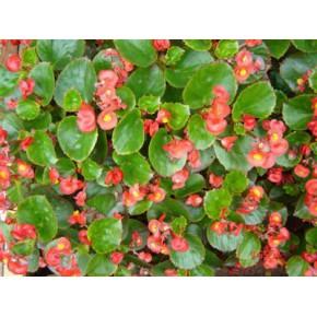 花卉绿植批发