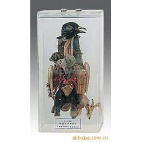 鸽解剖浸制标本及生物切片