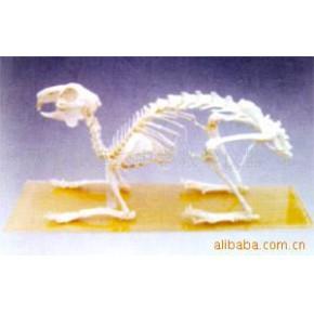 兔骨骼标本 免骨骼 教学实验用