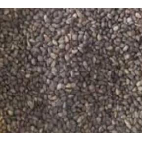 批发:白皮松种子,白皮松种子价格,白皮松种子批发价格