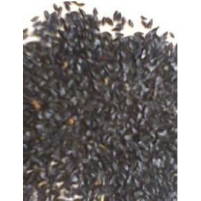 批发:花葱种子,花葱种子价格,花葱种子批发价格,花葱种子