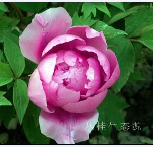 广西八桂生态源生物工程有限公司
