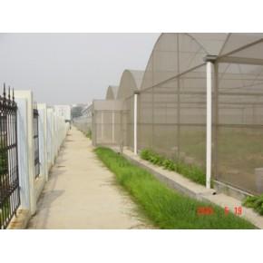 建设连体大棚 冬暖式蔬菜大棚 简易拱棚 育苗温室基地