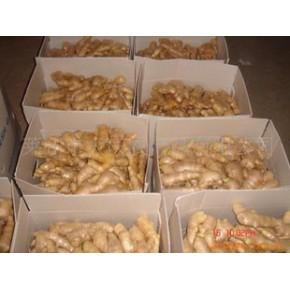 Supply fresh ginger