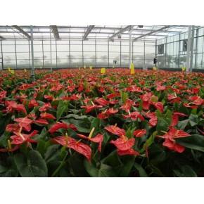 育苗温室|温室厂家|昆明育苗温室