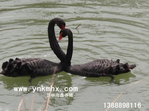 云南海鑫野生动物驯养繁殖基地