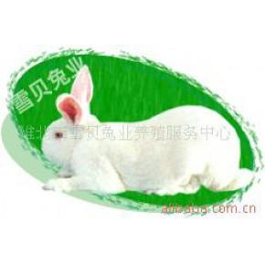 法系獭兔 獭兔 淮北 獭兔