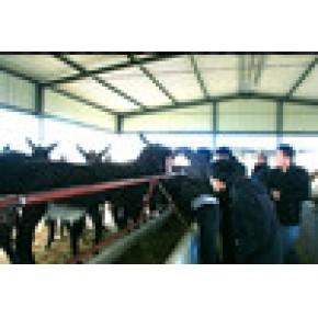 圈养肉驴 优质品种华夏牧业优惠供应