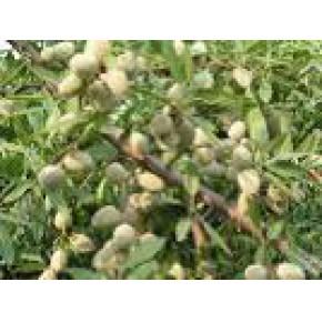 山东大好桃树苗、苹果苗、柿子苗、樱桃树苗、葡萄育苗基地