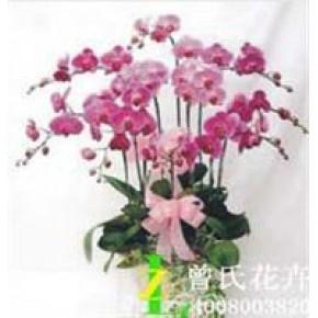 室内花卉品种搭配有学问曾氏花卉成都花卉配送好公司