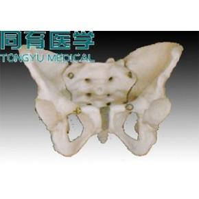 苏州同科女性骨盆模型