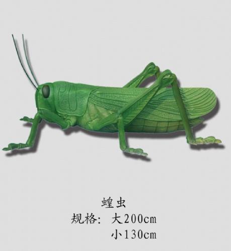 【节肢动物蝗虫,生物园