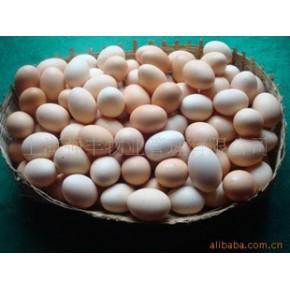 江西六石岩白耳黄鸡蛋 白耳黄鸡蛋