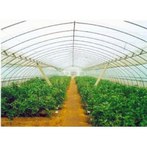 哪里建造钢架蔬菜大棚好 寿光市爱农温室大棚 高寿命成本低