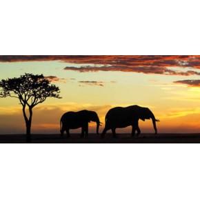 北京到肯尼旅游 6-9月肯尼旅游线路报价 和平国旅 值得信赖