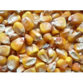玉米 甘肃玉米 4.0(%)