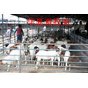山东华夏牧业牛羊养殖总场