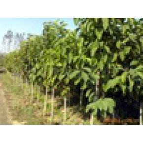绿化苗木、玉兰 玉兰 0(m)