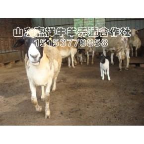 圈养羊吃什么 圈养羊技术资料