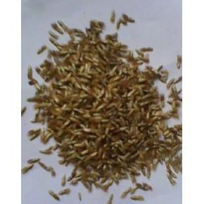 批发:矢车菊种子,矢车菊种子价格,矢车菊种子批发价格
