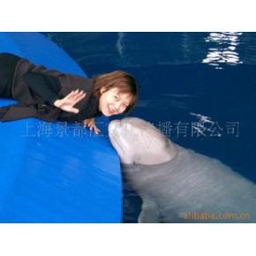 上海长风海洋世界门票 成人票 95元/张