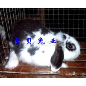 迷你宠物兔 宠物兔、其他