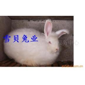 长毛兔 长毛兔、其他 毛用兔、其他