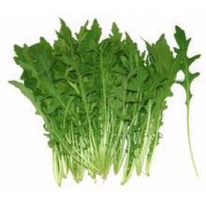 芝麻菜种子