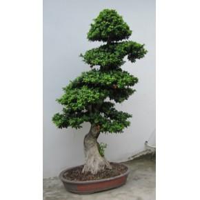 福州绿化养护 福州绿化种植