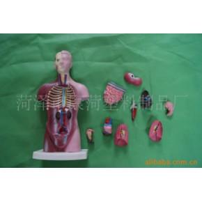 提供塑料人体内脏模型加工