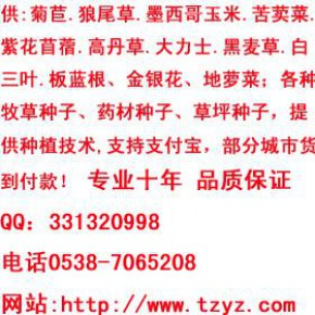 蝗虫养殖VCD免费赠送新老客户