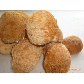 猴头菇 猴头 猴头菇干 保鲜猴头菇 野生猴头菇